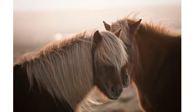 Fathomless moments - interview with nature photographer, Zita Karádi